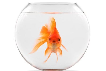 goldfishbowl